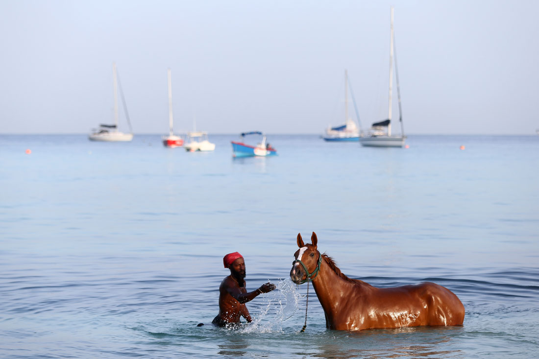 Poetic License enjoys an early morning soak,Pebbles Beach,Barbados,May 2015