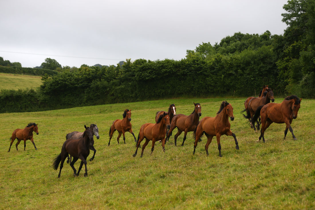 Horses are rounded up ending their summer break, July 13, 2015