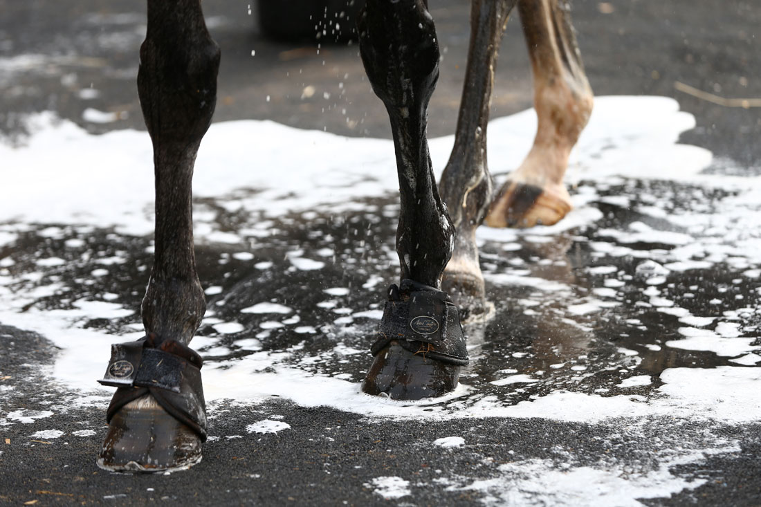 Wet hooves, 11 August 2015