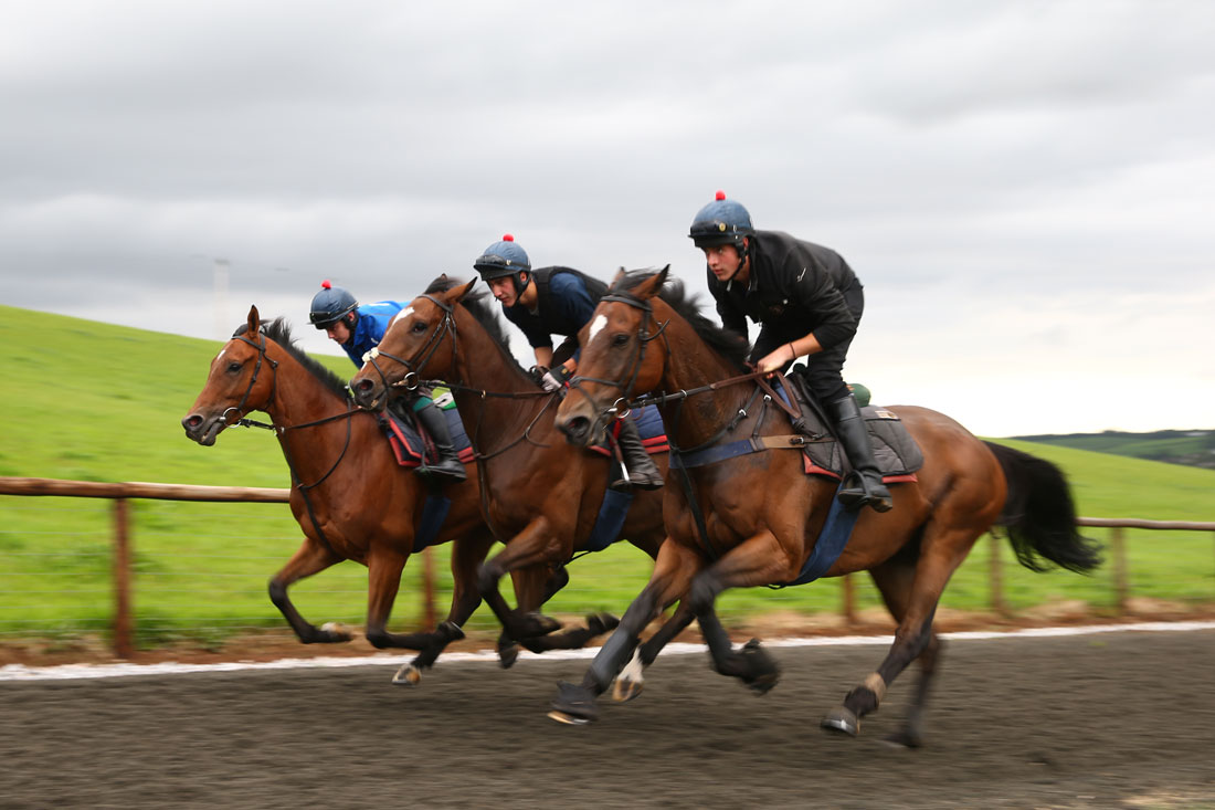 Kings Theatre,Bacchanel and If in Doubt sprint on the polytrack. 16th September