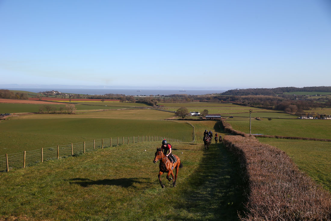 Up hill on the grass gallops 2nd lot, 31st March 2016